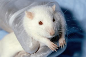 Could 3D printing spell the end of animal testing