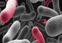 Trials look to create inexpensive bacteria using 3D printers